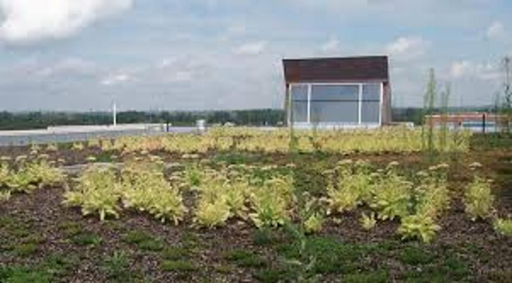 UOIT vegetated roof